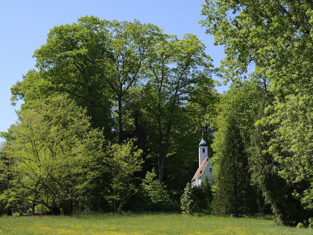 Freisinger Weltwald