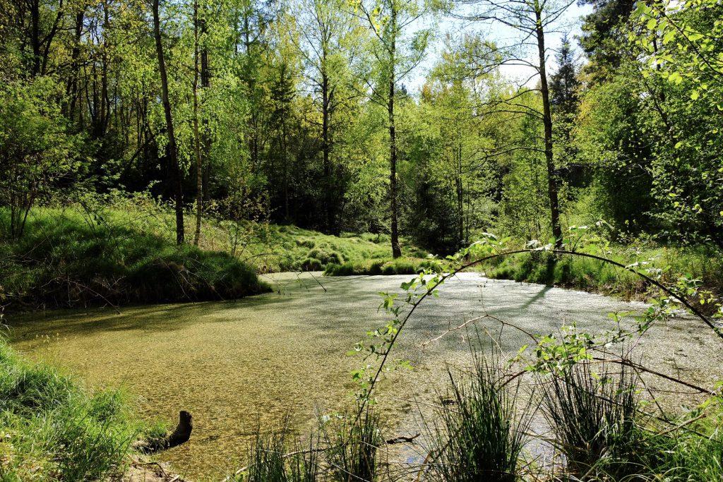 Biotop im Wippenhauser Wald